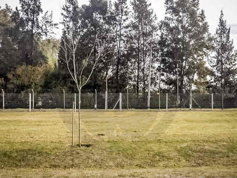 venta-lote-pilar-del-este-km-40-al-50-pilar-56493